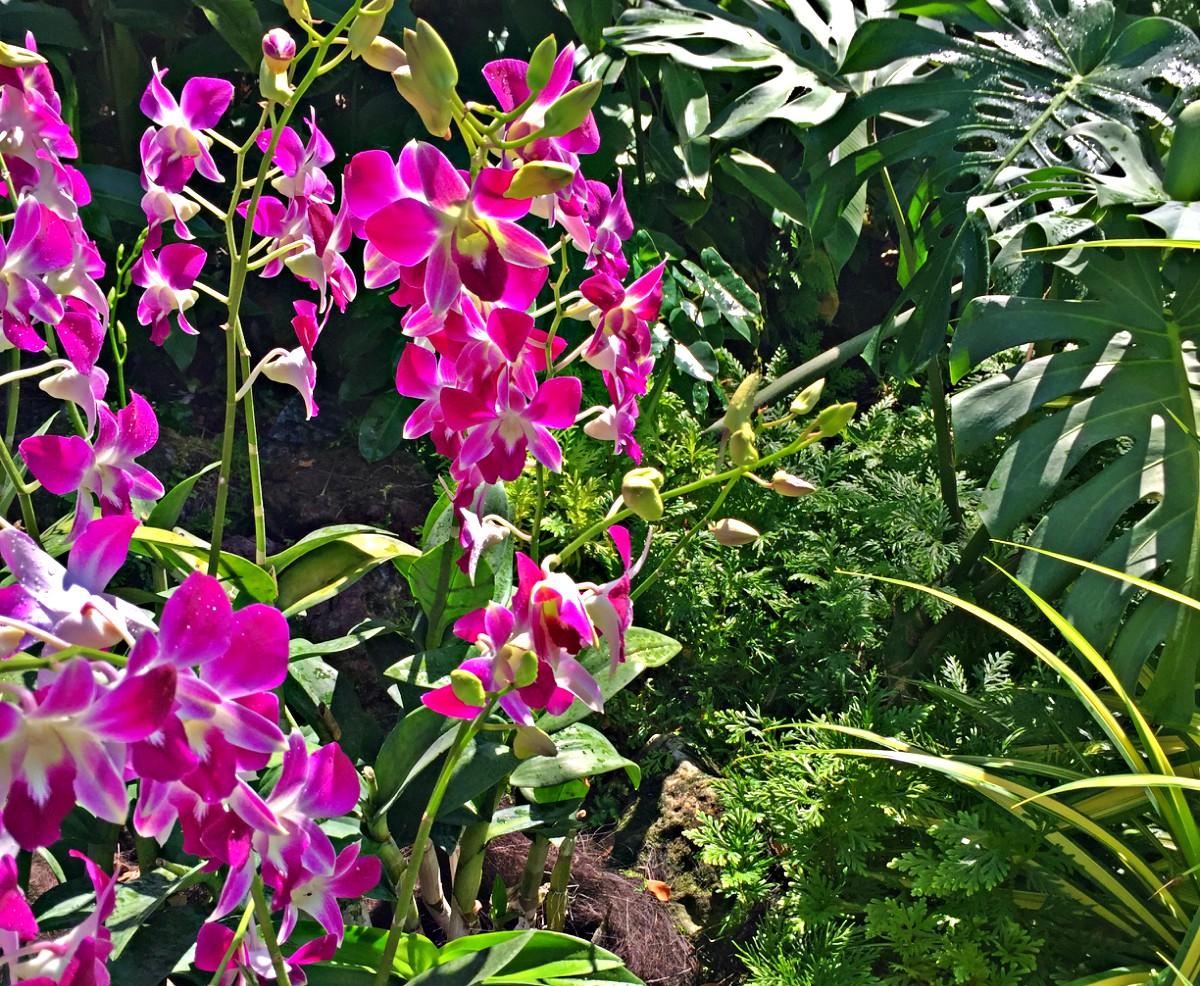 Orchideen in Dimensionen