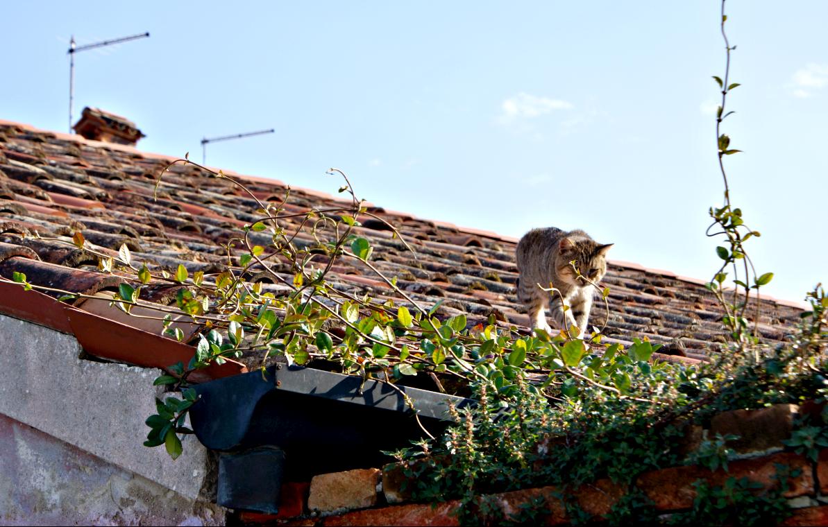 Bewohner in Burano
