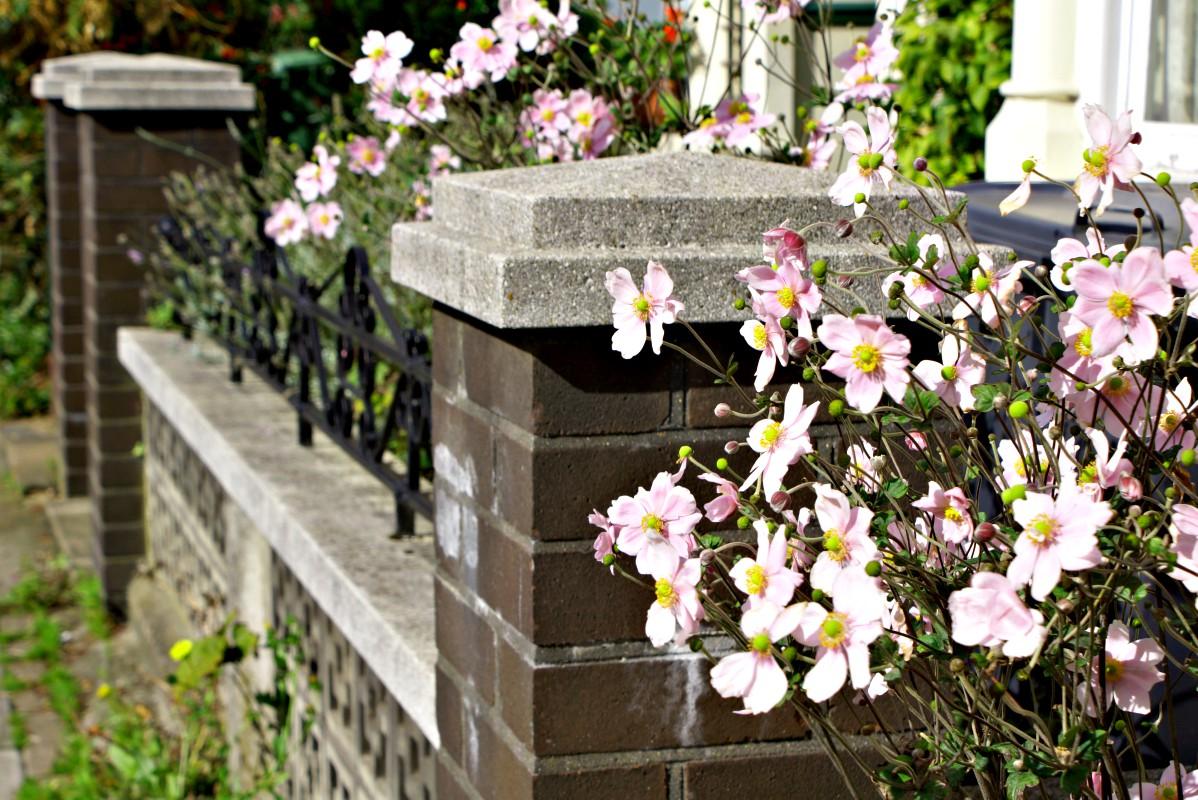 Londons Blüten